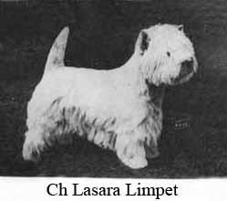 LasaraLimpet